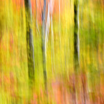Foliage Abstract, Vermont (5109)