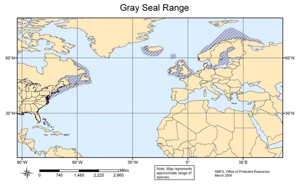Gray Seal Range Map