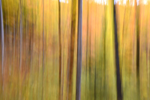 Fall Abstract, Vermont (5038)