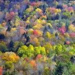 Fall Colors, Vermont - USA (3762)