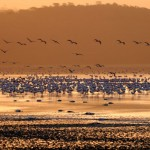 Flamingo Sunset, Lake Nakuru - Kenya (631)
